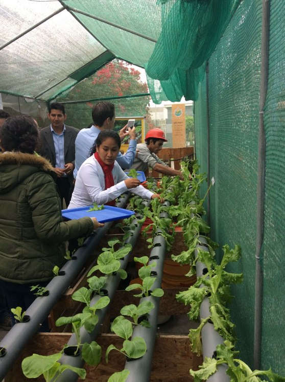 hydroponic_gardening1