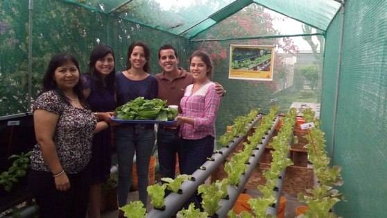 hydroponic_gardening3