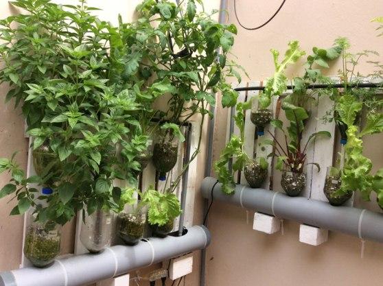hydroponic_gardening4
